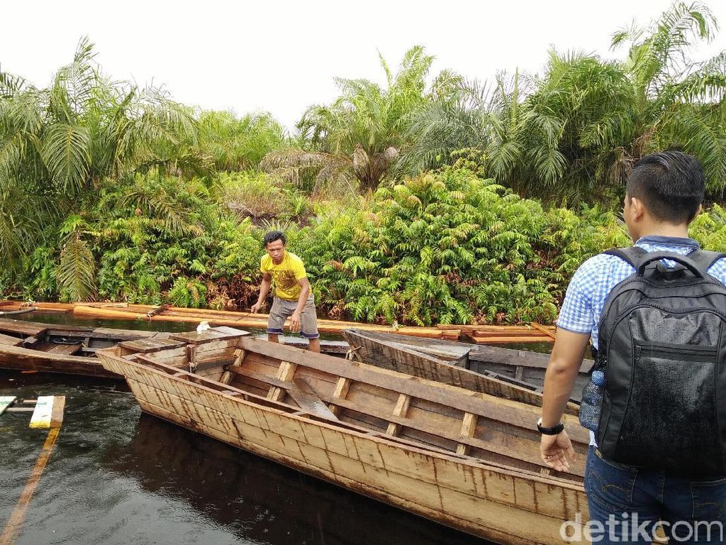 Memburu Jejak Pelaku Illegal Logging ke Pelosok Hutan Riau