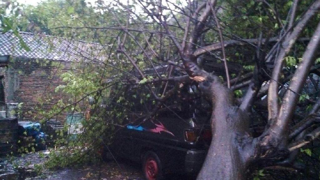 Hujan Disertai Angin Kencang Tumbangkan Belasan Pohon di Solo