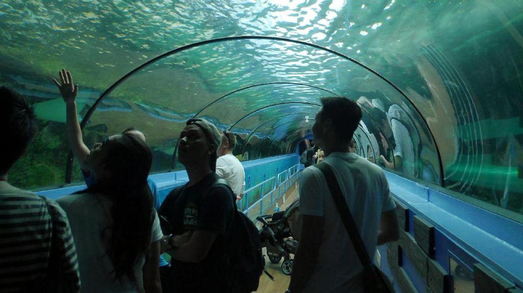 Mengenal Aneka Makhluk Laut Keren di SEA LIFE Sydney