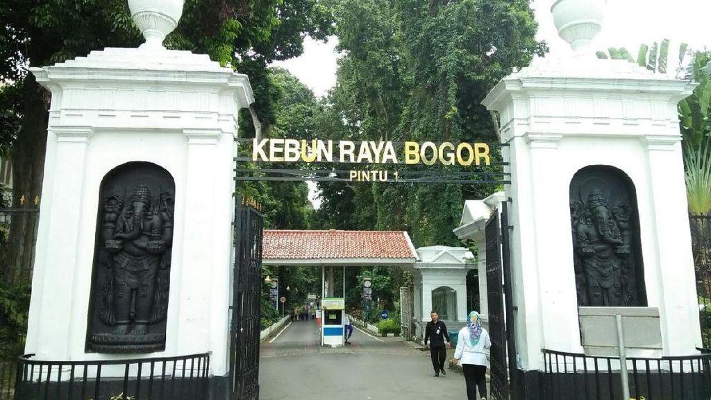 Cari yang Segar-Segar, Yuk Libur Akhir Pekan di Kebun Raya Bogor