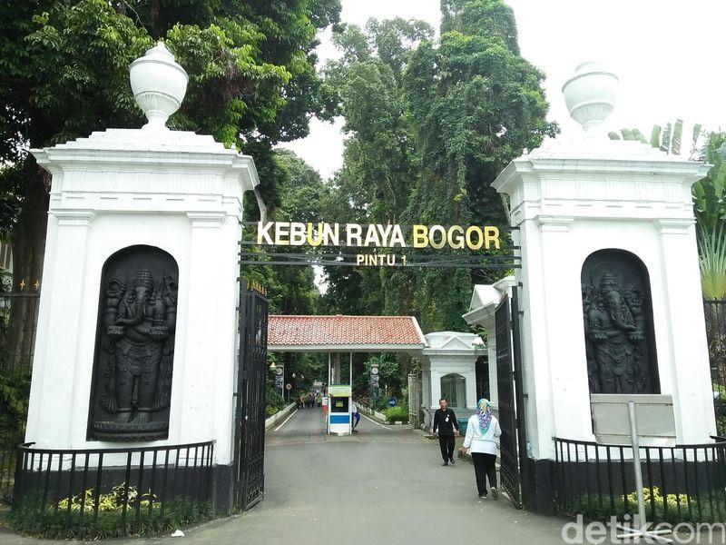 Kebun Raya Bogor terletak persis bersebelahan dengan Istana Kepresidenan Bogor. Traveler yang mau ke sini bisa membayar karcis seharga Rp 14.000 per orang (Bonauli/detikTravel)