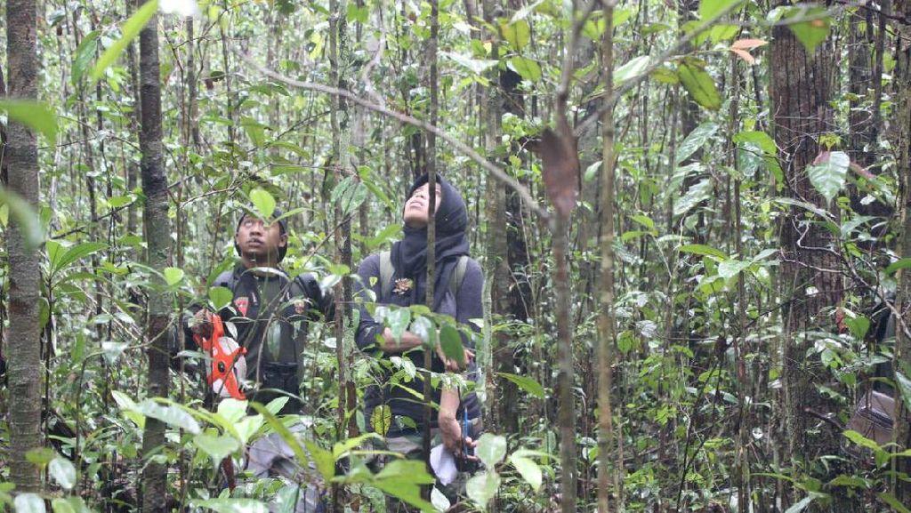 Hutan Adat, Pohon Ulin & Mitos Kutukan di Kalimantan Tengah