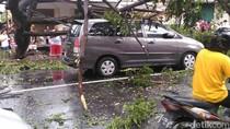 Hujan Deras Disertai Angin, Di Rungkut Pohon Tumbang Timpa Innova