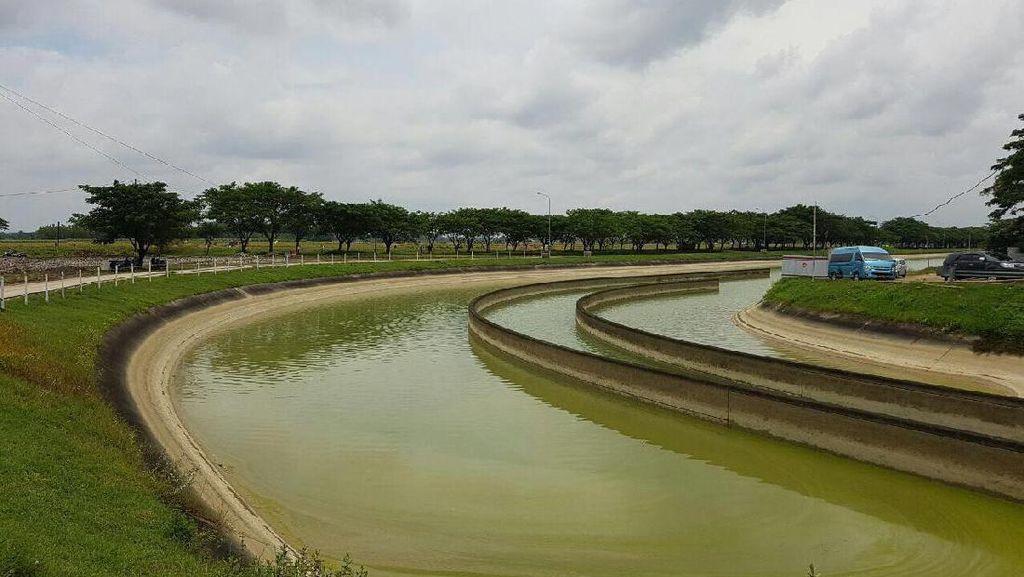 Apa Kabar Proyek 1 Juta Hektar Irigasi Baru Jokowi?