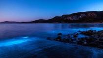 Ajaib! Saat Lautan Australia Berubah Warna Jadi Biru Bercahaya