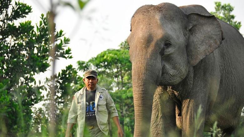Kisah Patroli Gajah Terbang di TN Tesso Nilo Riau