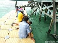 Foto: Pantai ini punya dermaga terapung. Para pengunjung umumnya membawa beberapa potong roti, sehingga ikan-ikan datang mendekat (Bonauli/detikTravel)