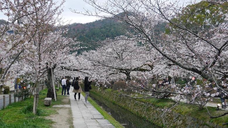 Foto: Philosophers Path di Kyoto (Kurnia/detikTravel)