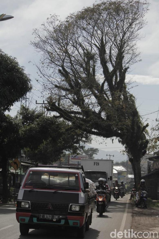 Pohon Tua Ancam Pengendara di Jalan Raya Banjaran-Soreang