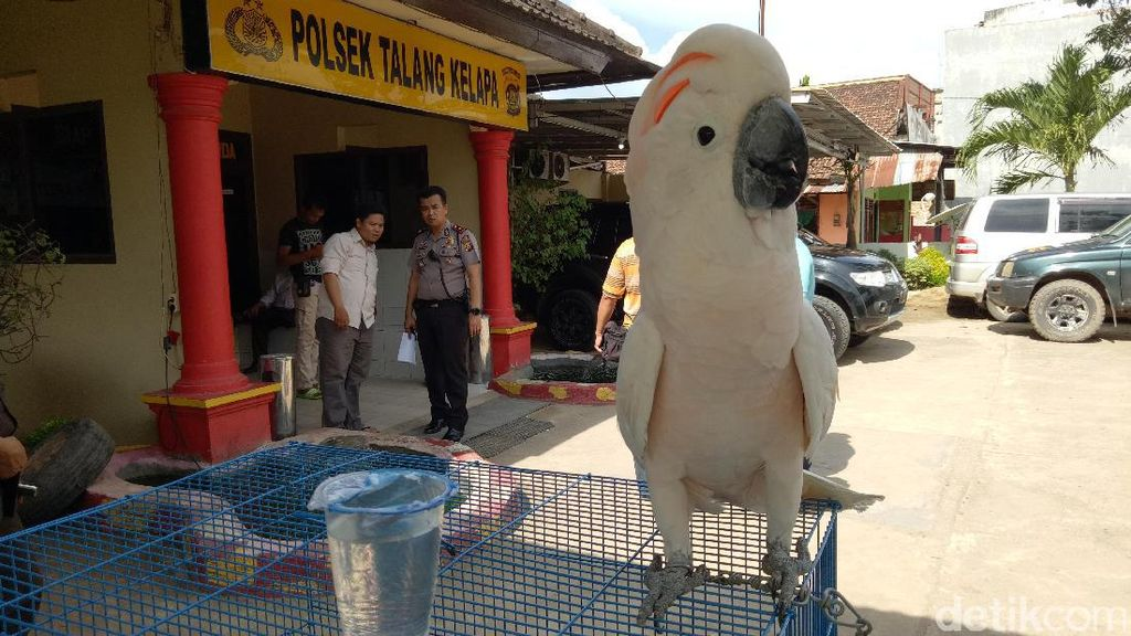 Polisi Tangkap Jaringan Penjual Satwa Dilindungi Lintas Provinsi