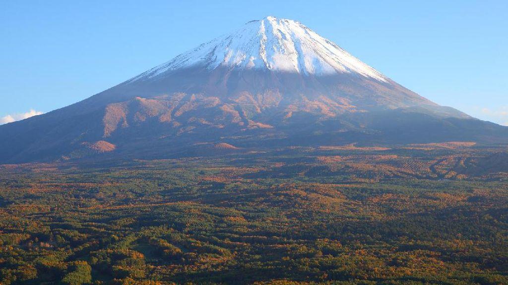 Sisi Lain Hutan Bunuh Diri Jepang yang Harus Kamu Tahu