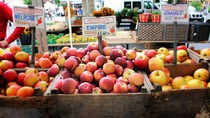 Sebelum Dimakan, Buah Apel Biasanya Disimpan Selama 10 Bulan