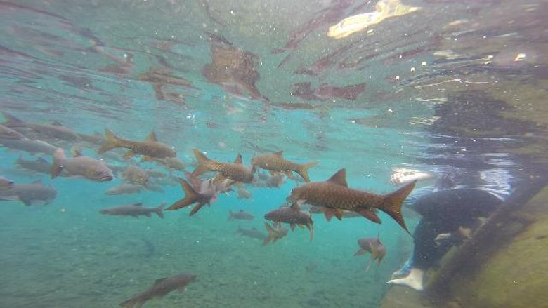 Berenang dengan ikan di Banyu Biru (Muhajir Arifin/detikTravel)