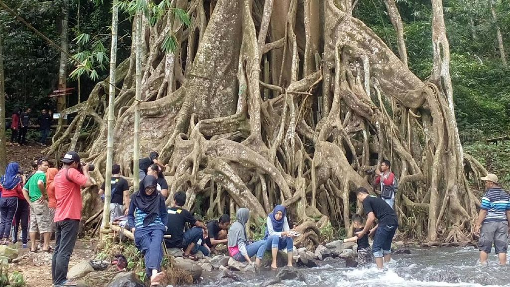 Satu Lagi, Mojokerto Punya Pohon Akar Seribu yang Indah!