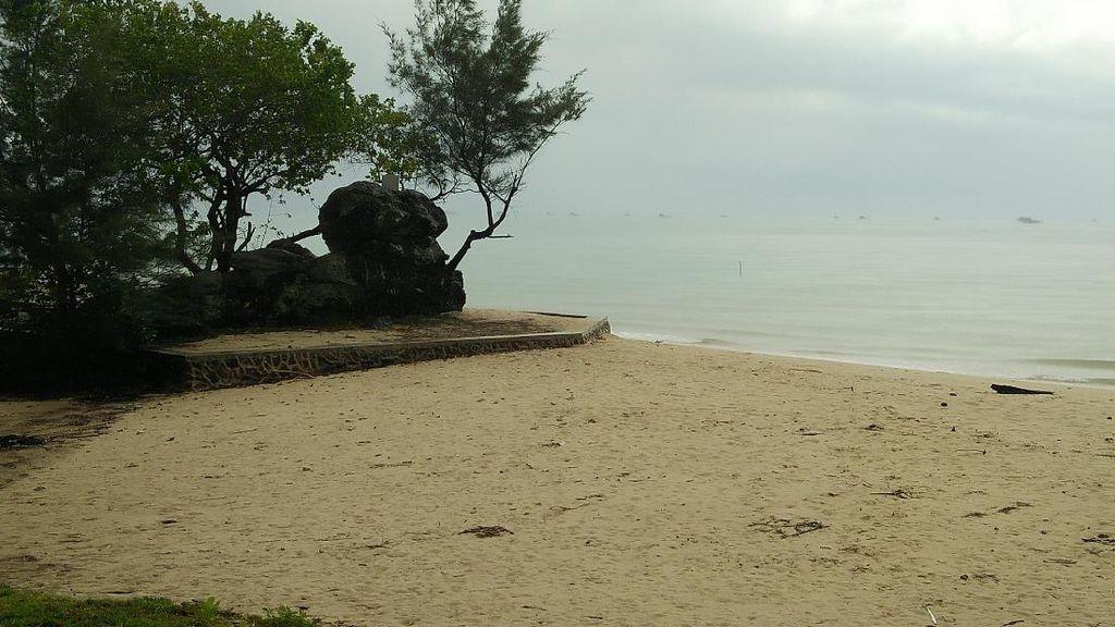 Unik, Ada Batu Berdaun di Pantai Kepri
