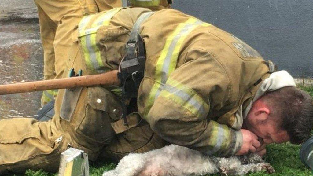 Petugas Damkar ini Selamatkan Anjing dengan Napas Mulut ke Mulut