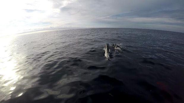 Lumba-lumba yang mendekat bikin kagum sekaligus terkejut
