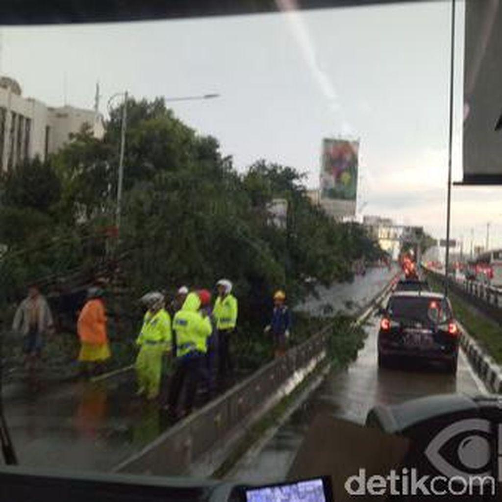 Petugas Masih Evakuasi Pohon yang Bertumbangan di Jakarta
