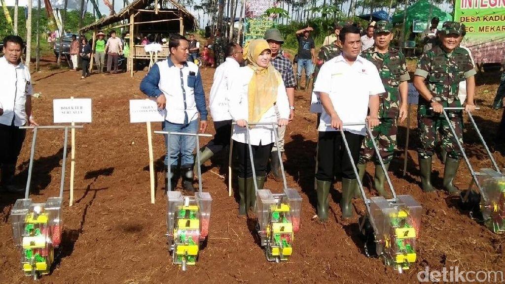 Mentan Amran Panen Jagung 120 Hektar di Pandeglang
