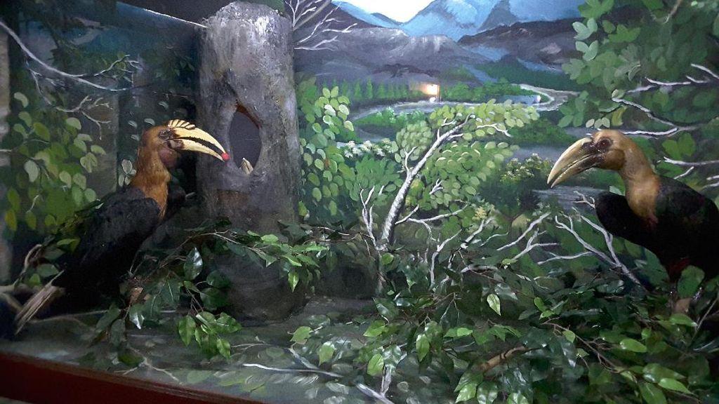 Yuk, Ajak Anak Lestarikan Burung Rangkong yang Terancam Punah