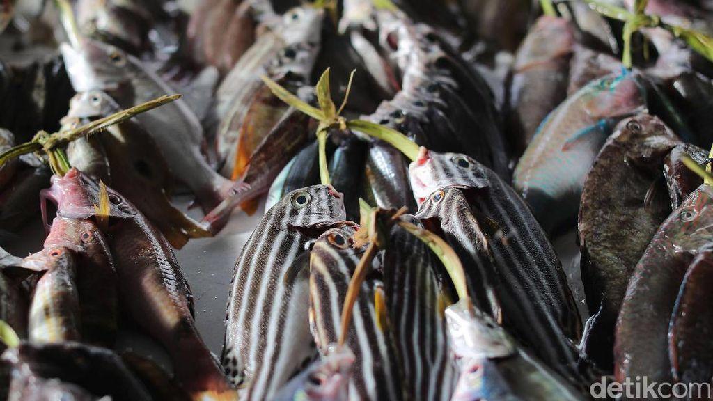 Konsumsi Ikan Orang RI Rendah, di Bawah Malaysia dan Singapura