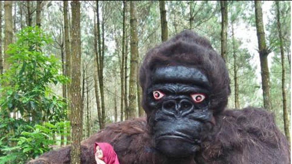 Heboh Penampakan King Kong di Hutan Pinus Magelang