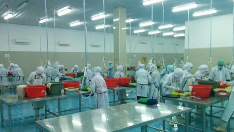 Perjuangan Eksportir Telur Ikan Terbang Sulsel Tembus Pasar Asia