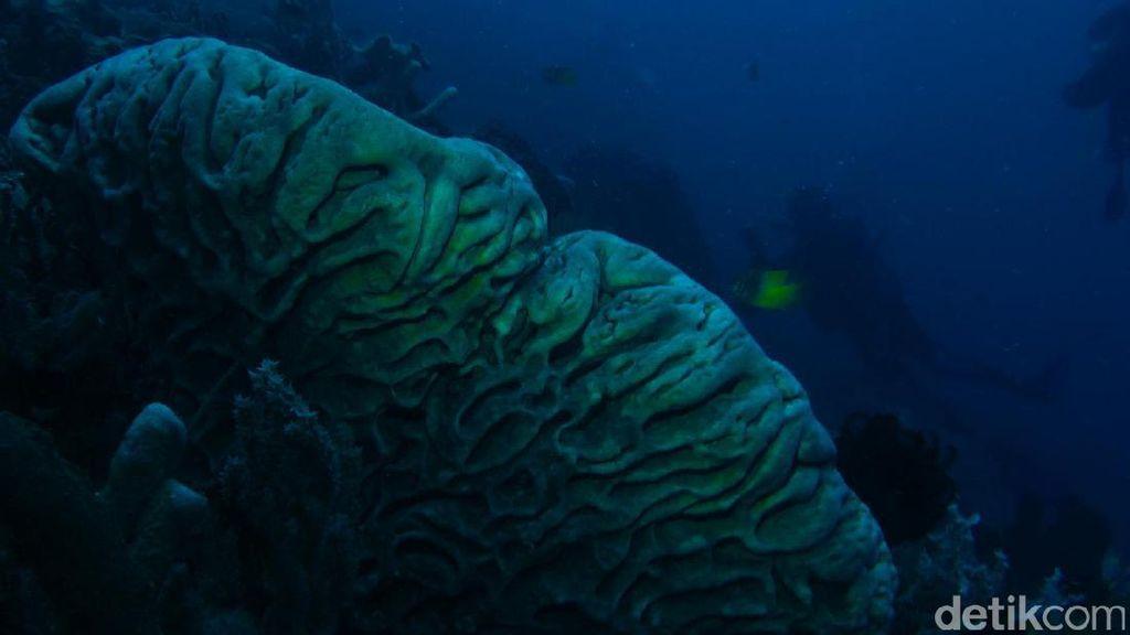 Diving di Gorontalo, Ada Orangutan Bawah Laut!
