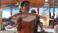 Penjual lain bernama Kori mengatakan Atambua menghasilkan banyak ikan yang dibawa dari Pantai Atapupu. Dia mengangkat seekor ikan merah yang dia jual (Fitraya/detikTravel)