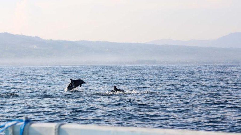 Mengejar Lumba-lumba di Pantai Lovina