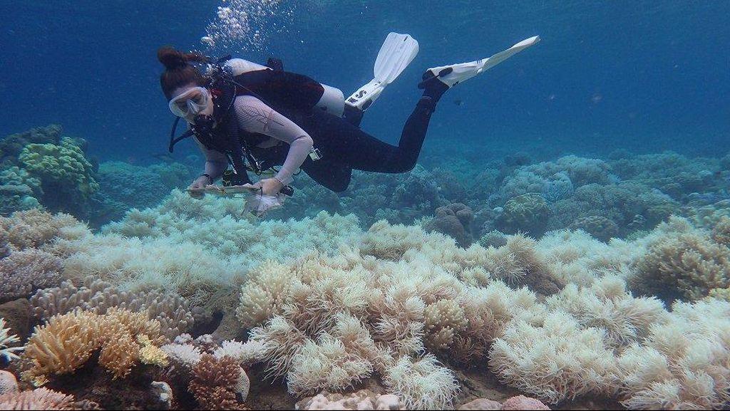 Dua-pertiga Terumbu Karang Great Barrier Reef Rusak Akibat Pemutihan