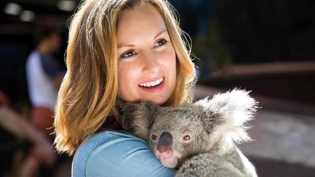 Liburan ke Brisbane & Gold Coast, Jumpa Koala Sampai Lumba-lumba