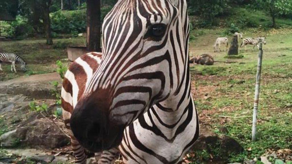 Berinteraksi dengan Fauna di Taman Safari Prigen