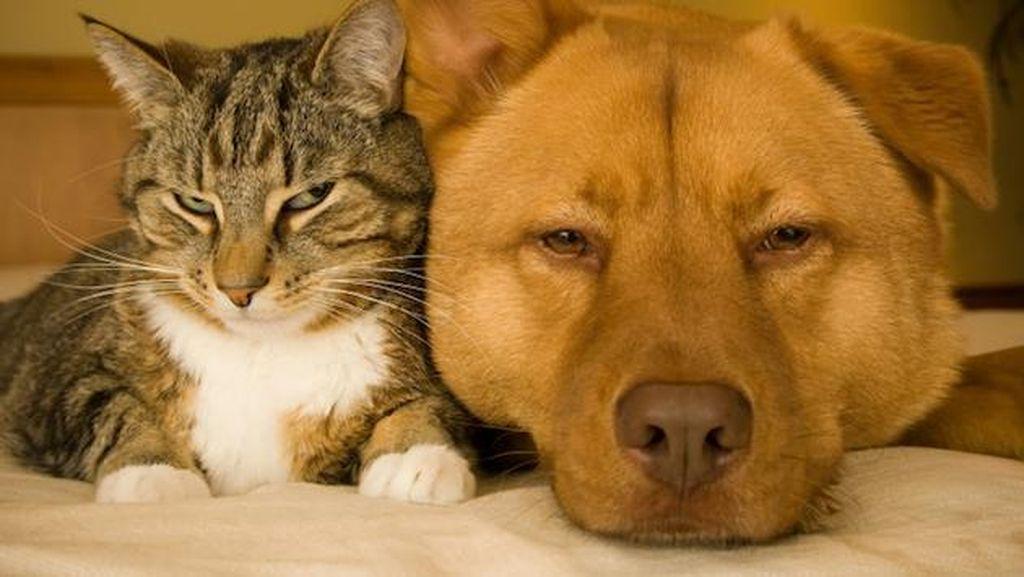 Taiwan Segera Berlakukan Undang-undang Larangan Makan Daging Anjing dan Kucing