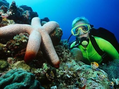 Ini 6 Tips Diving yang Kamu Harus Tahu