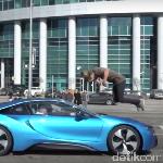 Aksi Nekat, Salto di Atas Mobil Berkecepatan 100 Km/Jam
