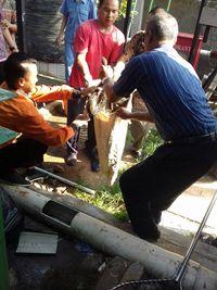 Ular sanca berhasil ditangkap dan dimasukkan ke karung