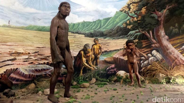 Foto: Display Homo erectus di Museum Manusia Purba Sangiran (Wahyu/detikTravel)