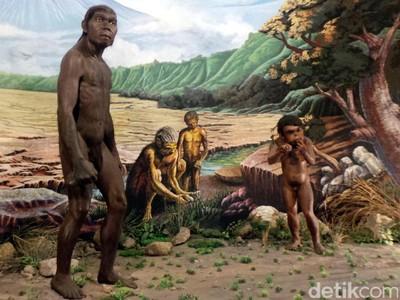 Menelusuri Jejak Manusia Pertama di Pulau Jawa