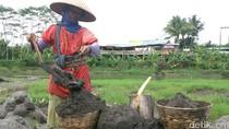 Hidupi Tiga Anak, Mundariah Gendong  50 Keranjang Pasir Tiap Hari