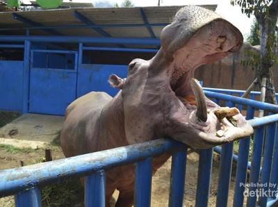 Yuk, Lepaskan Penat di Kebun Binatang Batu Secret Zoo! Gratis!