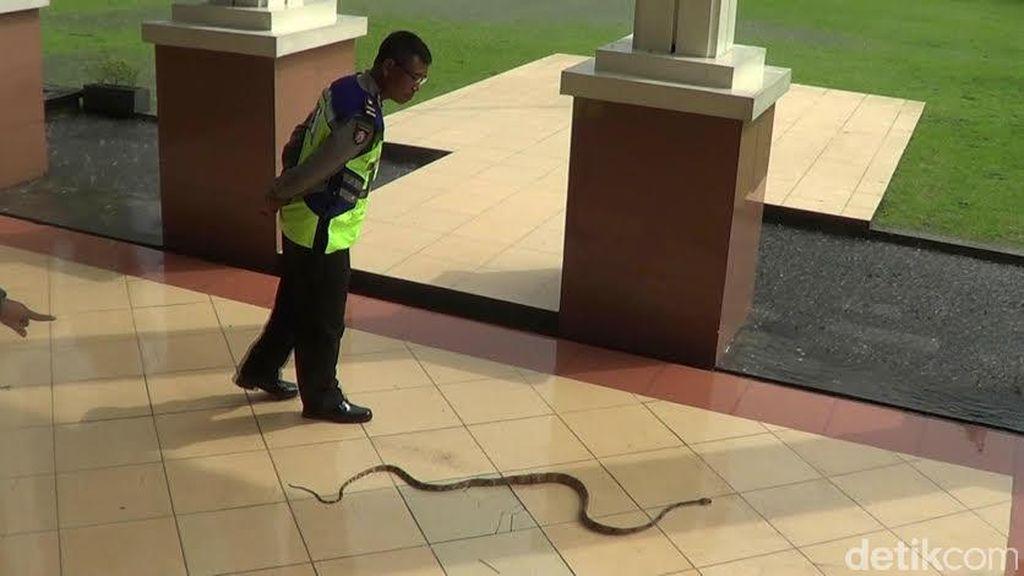 Penampakan Ular Saat Sidang Pembunuhan Siswa SMA Taruna Nusantara