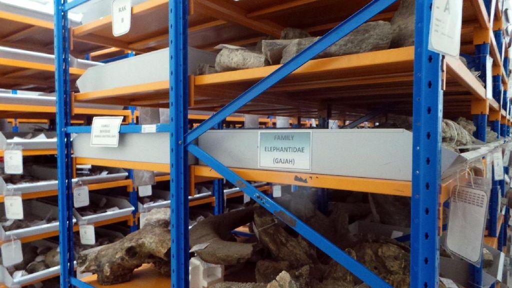 40 Ribu Fragmen Fosil Tersimpan di Museum Ini