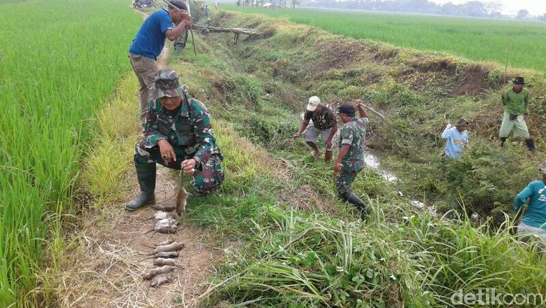 Soal Keterlibatan di Pertanian, TNI AD: Itu Perintah Presiden