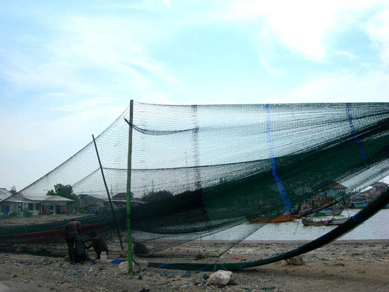 Mengenal Cantrang, Penangkap Ikan yang Bikin Susi Dipanggil Jokowi
