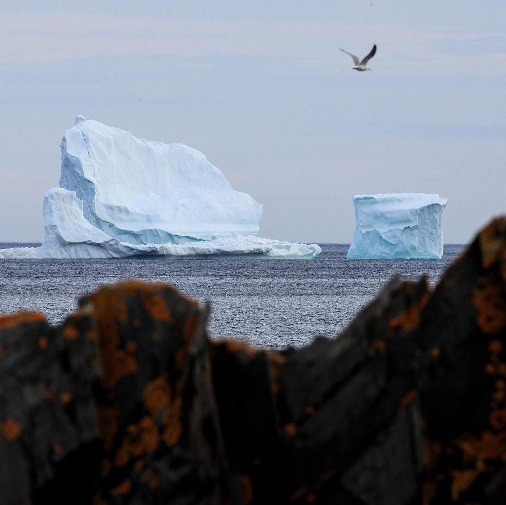 Heboh, Gunung Es Terapung di Pantai Kanada