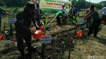 Ikon Baru Kabupaten Lamongan, Pisang Mas Kirana