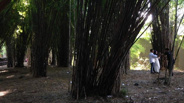 Suasana di Hutan Bambu Keputih (Zaenal/detikTravel)