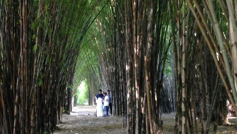 Hutan Bambu Keputih Surabaya (Zaenal/detikTravel)
