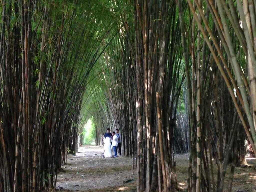 Foto: Hutan Bambu Keputih di Surabaya (Zaenal Effendi/detikTravel)